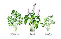 Small Standing Herbs: Cilantro, Basil, Parsley  Wall Stencil