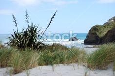 The walk to Wharariki beach is as amazing as the Wharariki Beach. New Zealand Beach, New Zealand Travel, West Coast Nz, New Zealand Flax, Kiwiana, Travel And Tourism, Beach Fun, Beach Photos, Image Now