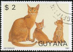Guyana 1987 Cat Stamps - Abyssinian