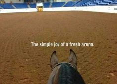 Aaah...who doesn't love this?   www.horseropeconnection.com