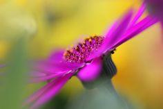 Photo windy pink by Frank Felischak on 500px