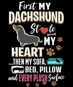 """See our internet site for more details on """"dachshund puppies"""". It is an exceptional spot to get more information. Dachshund Funny, Dachshund Breed, Dachshund Quotes, Dachshund Art, Long Haired Dachshund, Daschund, I Love Dogs, Puppy Love, Best Apartment Dogs"""