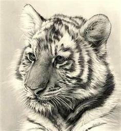 Tiger cub Tattoo | Tiger Cub Tattoo | Tattoos
