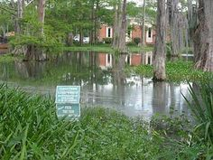 Cypress Lake in the middle of our UL Lafayette main campus