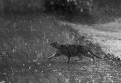 cat-rain.jpg 720×499 pikseli