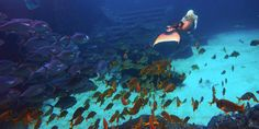 Real Life Mermaid Melissa is world-renowned for traveling the globe swimming the…