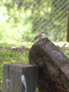 un visitante algo pequeño pero con una gran belleza Bird Feeders, Outdoor Decor, Animals, Home Decor, Naturaleza, Beauty, Animales, Decoration Home, Animaux