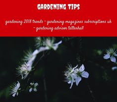 gardening tips_14_20180711081157_23 olive garden potatoes soup gardening naturally cirencester restaurants and pubs - Olive Garden Peoria Il