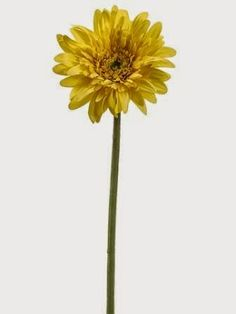 "Flowering Pumpkin  FSD801 21"" Gerbera Daisy Spray"