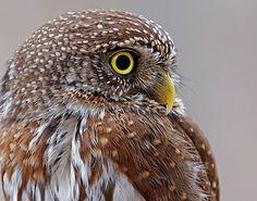 Look!! Owl