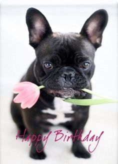 Cute birthday cards for bestfriend. Another adventure filled year awaits you. Welcome it by celebrating your birthday with pomp and splendor. Wishing you a very happy and fun-filled birthday!
