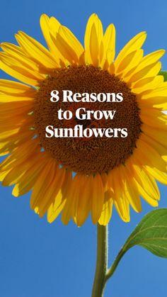 Sun Plants, Fall Plants, Garden Plants, Garden Yard Ideas, Garden Projects, Organic Gardening Tips, Organic Farming, Planting Vegetables, Veggies