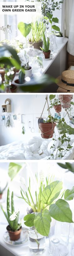 Ever dreamed of waking up with the sun, surrounded by green plants? Here's a couple of IKEA ways to invite nature into your home and bring a green oasis feeling to the urban jungle.