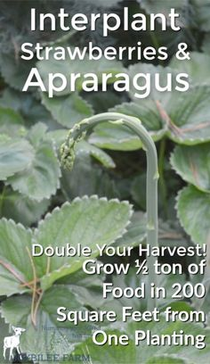 984 Best Gardening From Seed Images In 2020 Garden Gardening