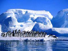 Antartika kutuplar penguenler--Bu tür yüzen yığınlardan biri olan Ross Buz Sahanlığı 540.000 km²'yi bulan alanıyla neredeyse Fransa büyüklüğündedir.