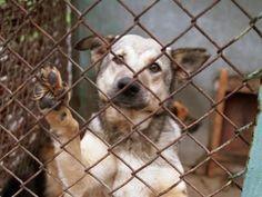 Uwięziony pies na balkonie w klatce metalowej w Łodzi