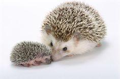 2 Ways To Grow a Spiky Tin Hedgehog Using Chemistry