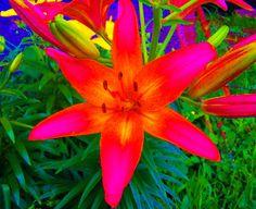 Bold Flower Color Photo
