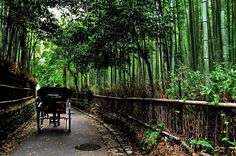 Road in the bamboo forest