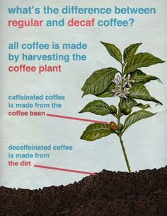 Coffee differences...