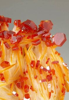 Vanadinite crystals on blades of Barite Cool Rocks, Beautiful Rocks, Minerals And Gemstones, Rocks And Minerals, Rock Collection, Mineral Stone, Rocks And Gems, Stones And Crystals, Gem Stones