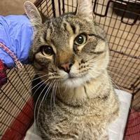 Austin Animal Center In Austin Texas In 2020 Pet Adoption Pets Saving Cat
