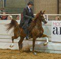 Interesting Facts About Arabian Horses You Probably Never Knew