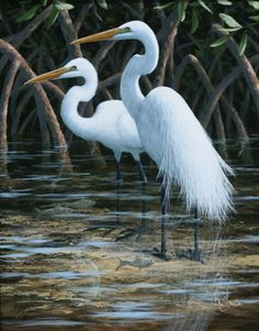 Image result for picture of an egret waiting in Florida