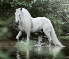 White horse just drifting like magic through the water.- White horse just drifting like magic through the water. White horse just drifting like magic through the water. Beautiful Horse Pictures, Most Beautiful Horses, Animals Beautiful, Cute Animals, Beautiful Gorgeous, Absolutely Gorgeous, Cute Horses, Pretty Horses, Horse Love
