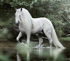 "scarlettjane22: "" photo by Emmy Eriksson Photography Horses & Freedom """