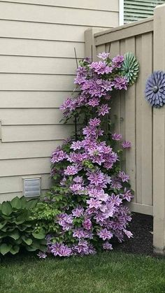 Outdoors Discover Clematis in May. Clematis in May. - Clematis in May. Clematis in May. Garden Yard Ideas Garden Projects Lawn And Garden Diy Projects Summer Garden Backyard Ideas Modern Front Yard Small Front Yard Landscaping Mulch Landscaping Cheap Landscaping Ideas, Small Front Yard Landscaping, Backyard Landscaping, Landscaping Design, Front Yard Gardens, Front Yard Ideas, Fence Ideas, Small Front Yards, Landscaping Borders