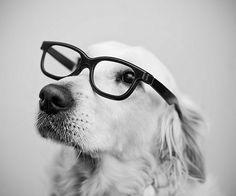 Perro con really SWAG. Su frase es: Mirando a la nada pensando en TODO