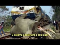 Esse vídeo deveria passar em rede Nacional ! Este é um ALERTA!!!! O Planeta pede Socorro!!!!