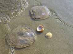 29.5.2014  tema: gladek... je klobuk meduze