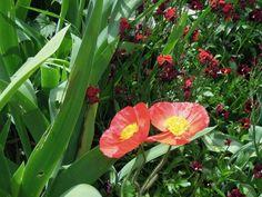 Use Monet's Colour Genius in Your Garden