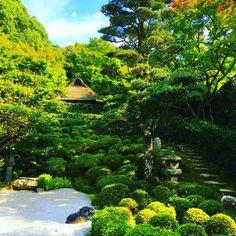 ✈金福寺 Konpukuji temple✈ 11月に入って京都のまちでも、少しづつ観光客さんが増えてきたような気がします。 寒くなってきたので、お味噌汁の美味しい季節になってきました。僕のテッパンは本田味噌のあさげと、京とうふ藤野のお揚げのお味噌汁っす。 お味噌汁を飲むとき、お椀にお茶っ葉をひとつまみ(ほんのちょっとだけ)入れてみてください。茶葉の旨味とコクで、お味噌汁がより一層美味しくなりますよ( ^ω^) #日本 #japan #japon #京都 #kyoto #kyotojapan #金福寺 #寺 #temple #japanesetemple #庭 #日本庭園 #garden #japanesegarden #枯山水 #青空 #bluesky