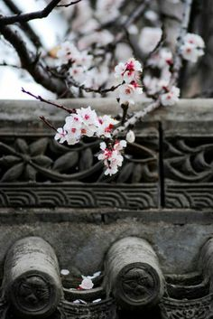 White Plum Blossoms in Xi'an Ancient City, China Chinese Style, Chinese Art, Traditional Chinese, Chinese Painting, Asia Expat, Photography Beach, Landscape Photography, Chinese Element, Art Asiatique