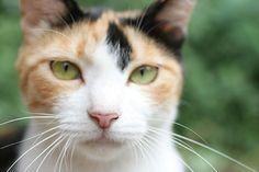 人物・動物>猫・ネコ>cat0118-066