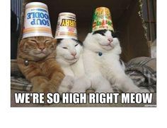You Can Haz Memes? 31 Hilarious Cat Memes From Around The Internet (Slide #44) - Pawsome