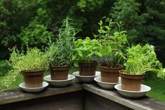 How to grow a vegetable garden, according to legendary chef Alice Waters Permaculture, Alice Waters, Sage Plant, Herbs For Health, Health Tips, Garden Posts, Aromatic Herbs, Herb Seeds, Growing Seeds