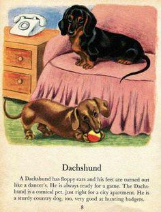 #vintage #dachshund #dachsie #doxie