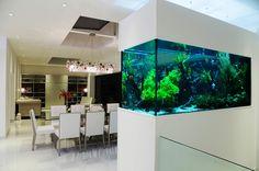 Freshwater Aquarium - Freshwater Planted Aquarium in a London residence Wall Aquarium, Nature Aquarium, Aquarium Design, Planted Aquarium, Aquarium House, Aquarium Cabinet, Aquarium Architecture, Fish Tank Design, Minimalist Room