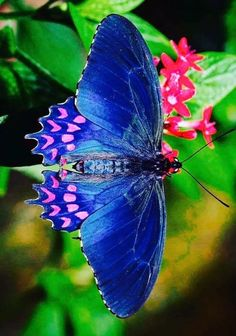 Types of Butterflies - Butterflies are one of the most adored insects for their enchanted beauty and representation of good luck and positive change. Butterfly Kisses, Butterfly Flowers, Butterfly Wings, Blue Butterfly, Butterfly Template, Butterfly Dragon, Monarch Butterfly, Butterfly Painting, Butterfly Wallpaper