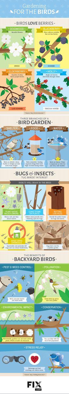 Gardening for the Birds #infographic #Gardening