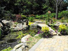 Saint Louis Water Gardening Society