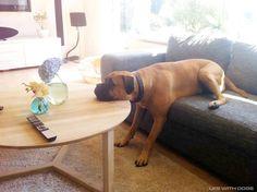 Sleepyhead takes a nap...