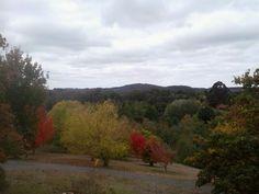 Mount lofty botanic gardens