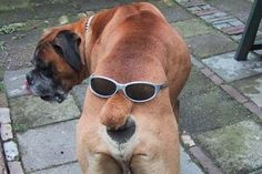 Dog bum with glasses