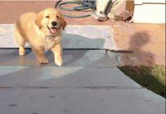 #dog #puppy #GIFs #fun Google+
