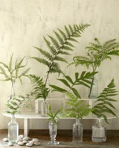 various glass jars with single fern wedding decor. would it be weird to throw roses in with ferns?